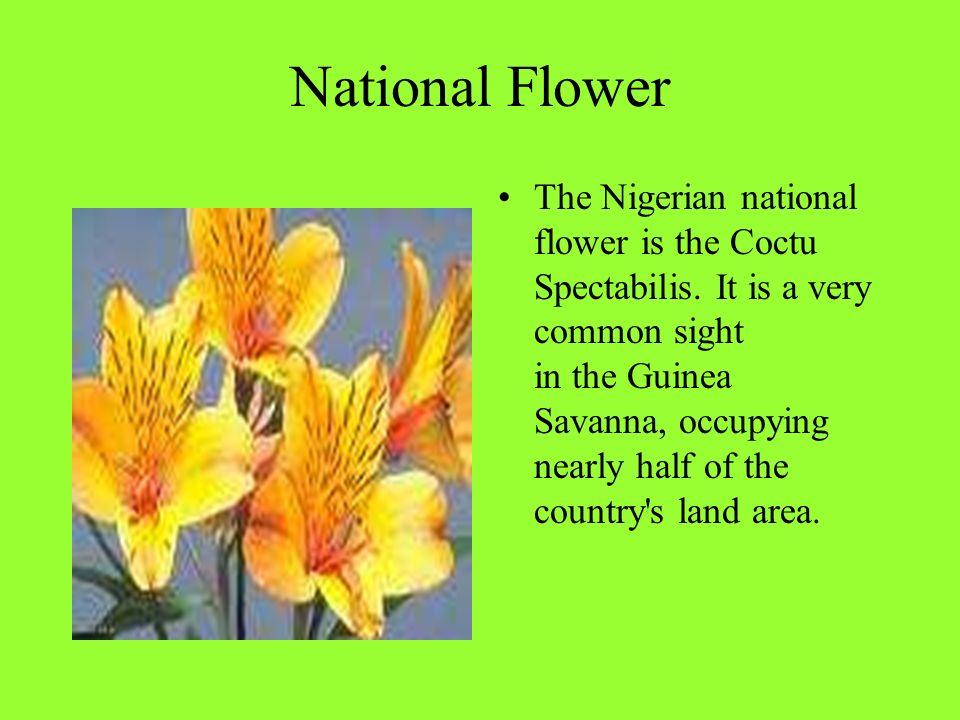 Nigeria National flower
