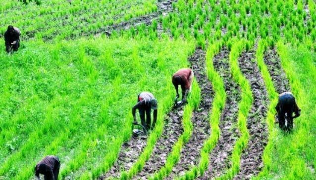 10 Roles of Agriculture in Nigeria Economic Development